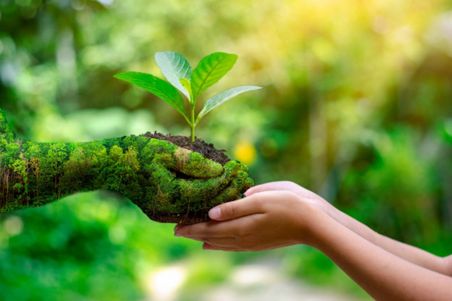 Reimagining, Recreating and Restoring our Ecosystem on World Environment Day 2021